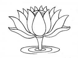 Sketch clipart lotus plant