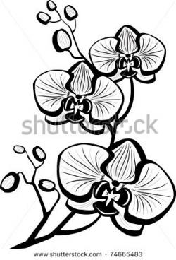 Sketch clipart orchid