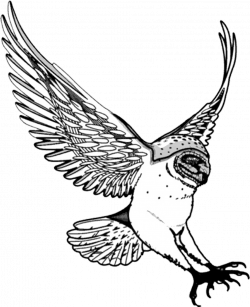 Osprey clipart swooping