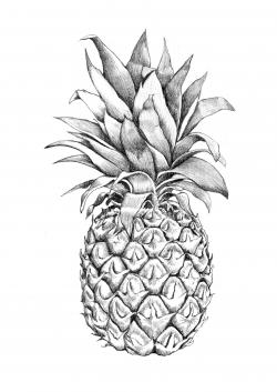 Drawn pineapple graphic design