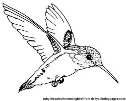 Drawn hummingbird black and white