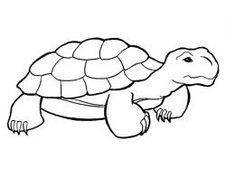 Drawn turtle tortoise