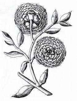 Drawn elower vintage flower