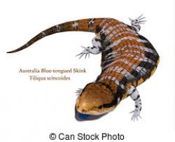 Skink clipart graphic