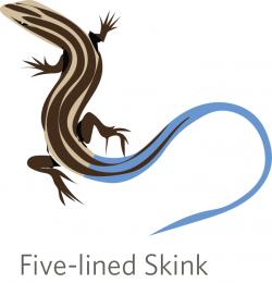 Skink clipart moisturizer