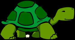 Turtoise clipart vector