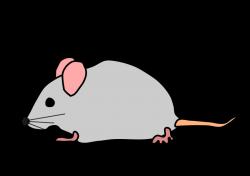 Vole clipart rat