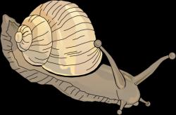 Mollusc clipart aquatic animal