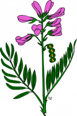 Snapdragon clipart