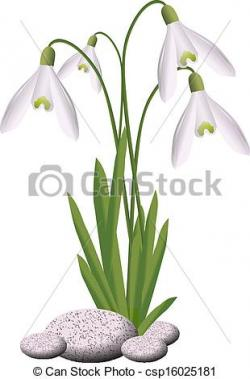 Snowdrop clipart drawing