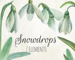 Snowdrop clipart winter flower
