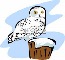 Burrowing Owl clipart snowy owl