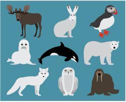 Hare clipart tundra