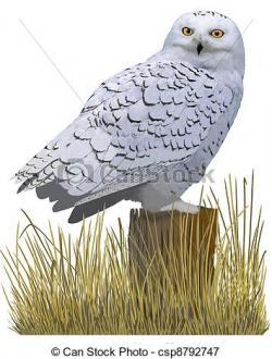 Snowy Owl clipart tundra