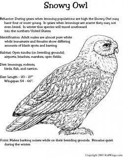 Snowy Owl clipart