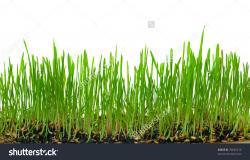 Soil clipart dirt ground