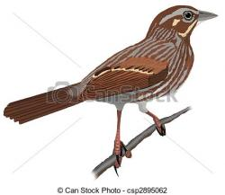 Song Sparrow clipart