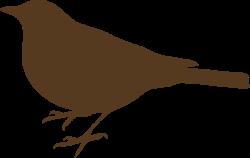 Blackbird clipart songbird