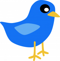 Bluebird clipart transparent