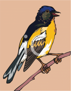 Finch clipart bird branch