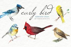 Canary clipart songbird