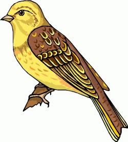 Finch clipart free bird