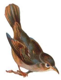 Nightingale clipart beautiful bird