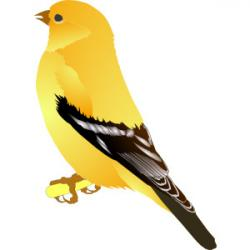 Finch clipart nightingale