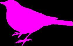 Songbird clipart pink bird