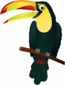 Toucan clipart keel billed