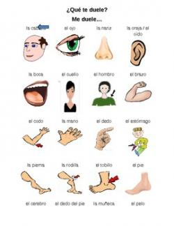 Spanish clipart body part