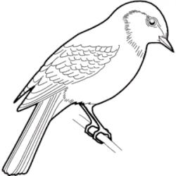 Drawn sparrow clip art