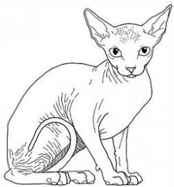 Sphynx Cat clipart