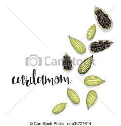 Spices clipart cardamom