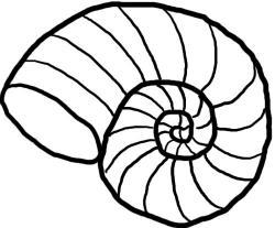 Mollusc clipart seashell
