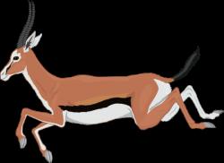 Pronghorn Antelope clipart gazelle