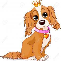 Springer Spaniel clipart cavalier king charles spaniel