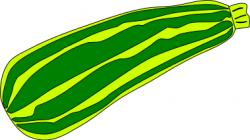 Zucchini clipart summer squash