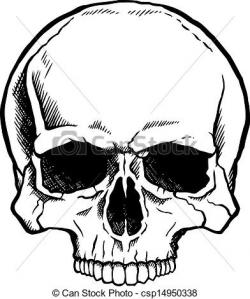 Ssckull clipart front