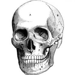 Ssckull clipart hamlet skull
