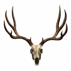 Ssckull clipart mule deer