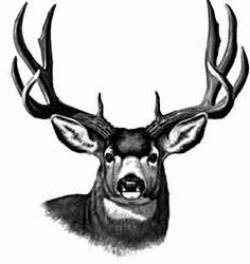 Head clipart mule deer