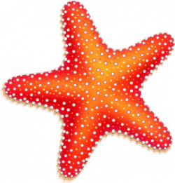 Coral clipart red starfish