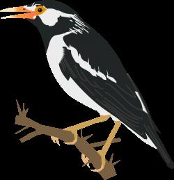 Nightingale clipart maya bird