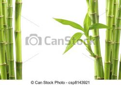 Stem clipart bamboo background