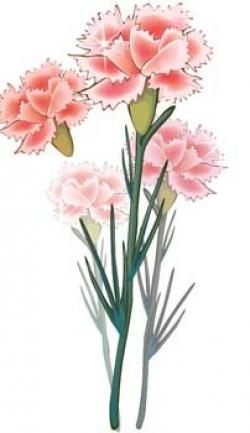 Carnation clipart single
