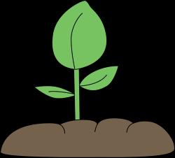 Soil clipart plant