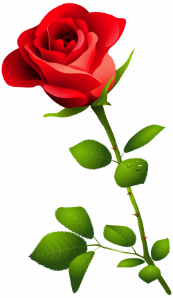 Nectar clipart red rose