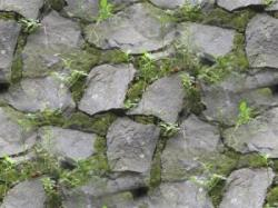 Moss clipart rock