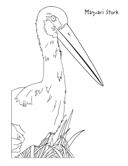 Stork clipart coloring